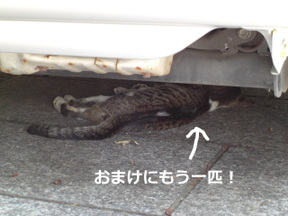 Under_the_car_3