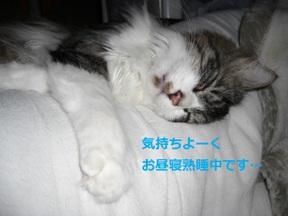 Sleepng_leo
