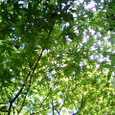 三滝の新緑